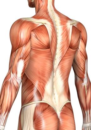 nakkens muskler
